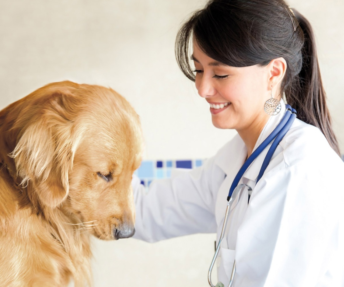 Your dog or cat first veterinary visit